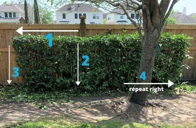 trimming hedge & shrubs: yard work