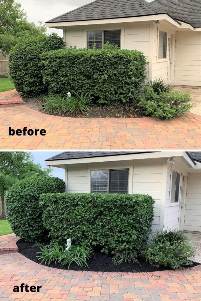 trimming hedges & shrubs: yard work